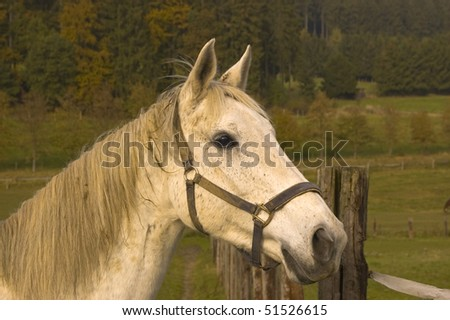Portrait of a white horse on a background of pastures. #51526615