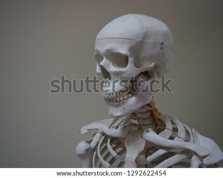 portrait of a white skeletal model on vintage style grey background