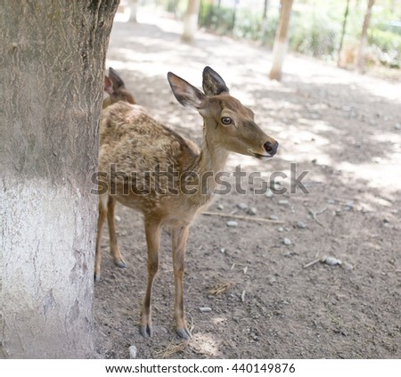 portrait of a young deer in zoo #440149876