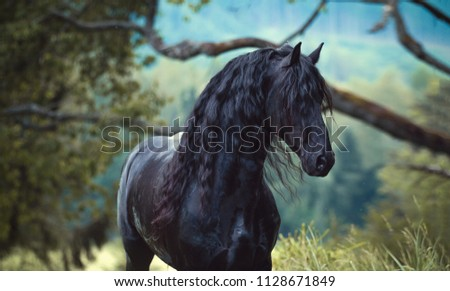 portrait of a young friesian stallion