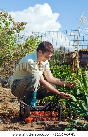 Portrait of a young man picking tomatoes on a farm