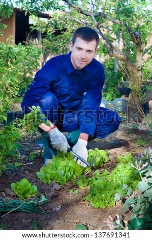 Portrait of a young man raking soil near salad #137691341