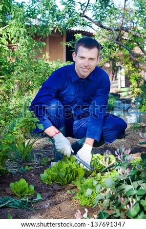 Portrait of a young man raking soil near salad #137691347