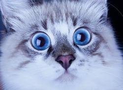 portrait of a young surprised cat snout