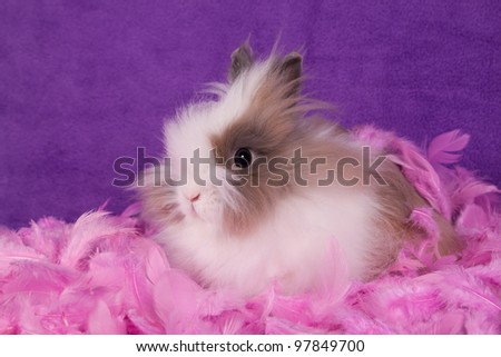 Portrait of adorable bunny with feathers on purple background