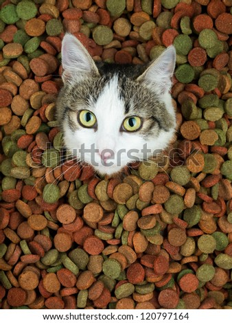 portrait of adorable cat in a heap of colorful dry food staring in front of her
