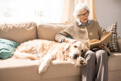 Portrait of adorable golden retriever dog sitting on couch with senior woman in sunlit living room, copy space