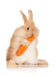 Portrait of adorable rabbit with carrot over white background