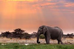 Portrait of african elephants with dusk sky, Etosha national Park Ombika Kunene, Namibia, wildlife photography