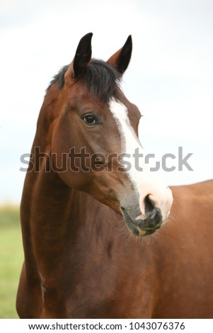 Portrait of amazing brown horse without bridle #1043076376