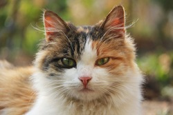 Portrait of amazingly beautiful multicolored young cat with green eyes and pink nose outdoors.