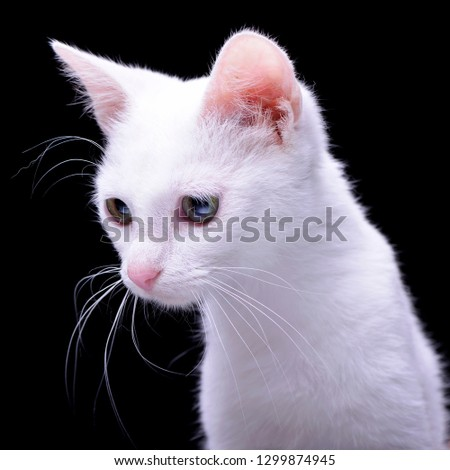 Portrait of an adorable domestic cat - isolated on black background.