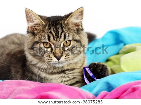 Portrait of an adorable grey tabby kitten playing with purple string over colorful fabric, perfect for cat or animal calendar.