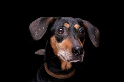 Portrait of an adorable mixed breed dog - isolated on black background.