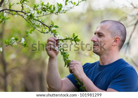 Portrait of an agronomist examining cherry tree flowers with selective focus