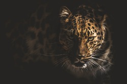 Portrait of an Eastern Leopard