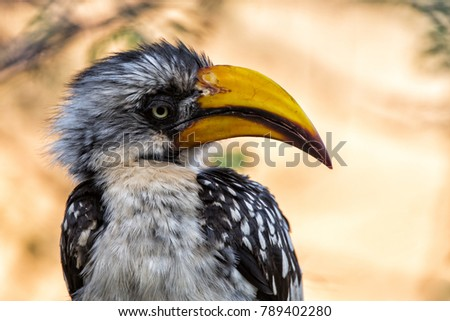 Portrait of an Eastern Yellow-billed Hornbill in Samburu National Park in Kenya