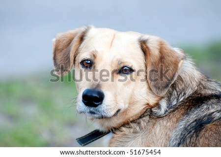 Portrait of an old friendly dog