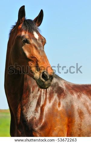 Portrait of bay horse against blue sky