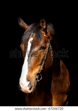 portrait of bay horse in dark #67246720