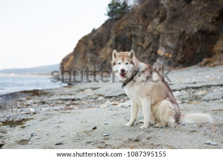 portrait of beautiful beige and ...