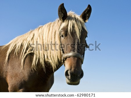 Portrait of beautiful brown horse on blue sky