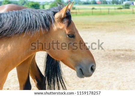 Portrait of beautiful brown horse on farrm #1159178257
