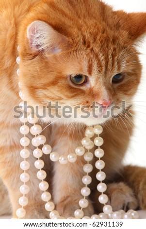 portrait of beautiful cat in pearl