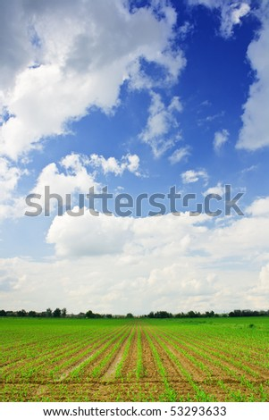 Portrait of beautiful corn field and blue sky for background with some clouds in grandangle view