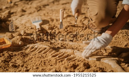 Portrait of Beautiful Paleontologist Cleaning Tyrannosaurus Dinosaur Skeleton with Brushes. Archeologists Discover Fossil Remains of New Predator Species. Archeological Excavation Digging Site Foto stock ©