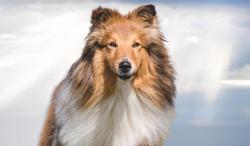 portrait of beautifully dog