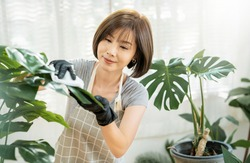 Portrait of beauty asian woman cleaning leaf in her living room. Young asia girl taking care of plants at her home. Hobby and leisure time, stay home quarantine. Green environment, earthday concept