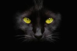 Portrait of black cat with green eyes on dark background