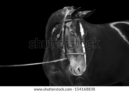 Portrait of black horse, isolated on black background, black and white picture