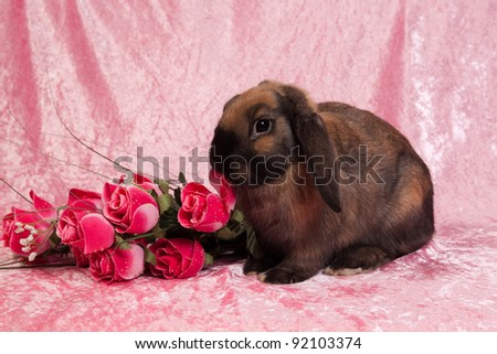 Portrait of brown rabbit with pink flowers on pink background