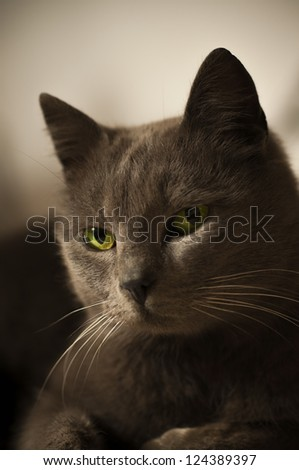 portrait of  cat closeup
