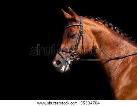 Portrait of chestnut horse, isolated on black background.