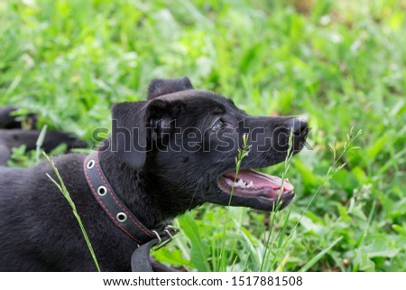 Portrait of cute homeless puppy from the dog shelter is lying in the green grass. #1517881508