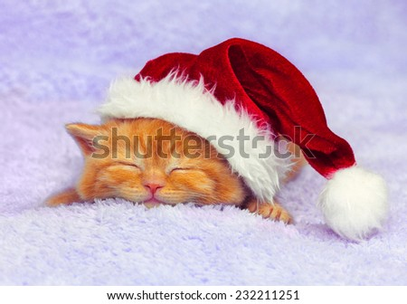 Stock Photo Portrait of cute little kitten wearing Santa's hat sleeping on a violet blanket
