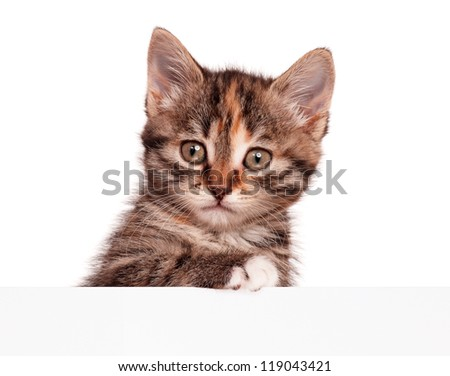 Portrait of cute little kitten with empty board is looking straight into camera on white background