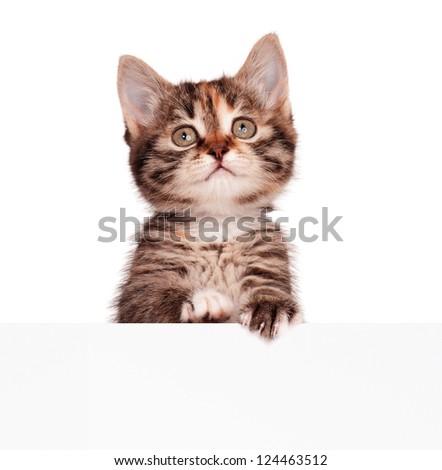 Portrait of cute little kitten with empty board on white background