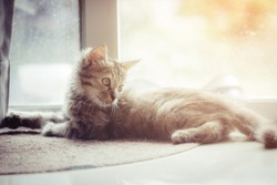 Portrait of cute little tabby kitten lying on the cement floor with the sun light background.