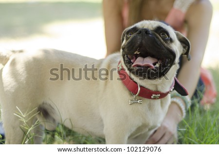 Portrait of cute pug dog and owner hanging out at the park