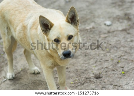 Portrait of cute street dog warning stranger about don\'t cross the line