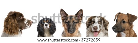 Portrait of different breeds of dogs against white background, studio shot