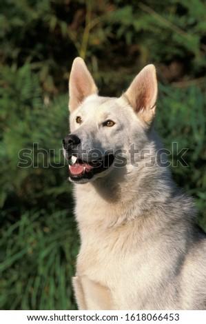 Portrait of Dog Portrait of Dog