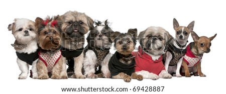 Portrait of dogs dressed up in front of white background
