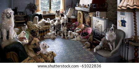Portrait of 24 dogs in a living room in front of a TV - stock photo