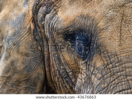 Portrait of Elephant