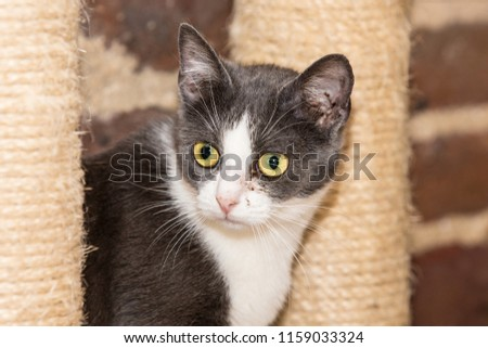 Portrait of european cat living in belgium #1159033324